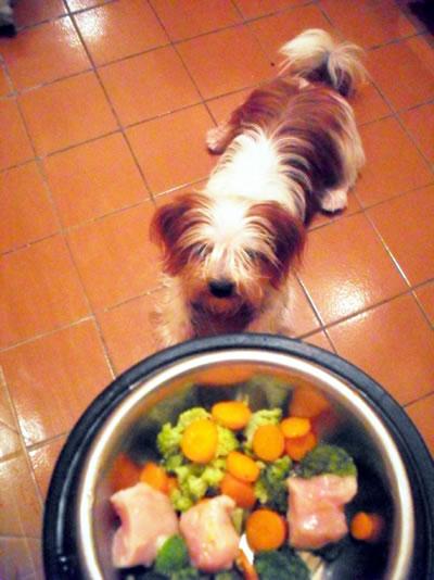 sushi-cachorro-verde