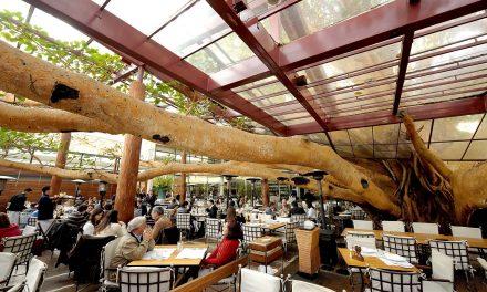 Restaurantes que nasceram ao redor de árvores