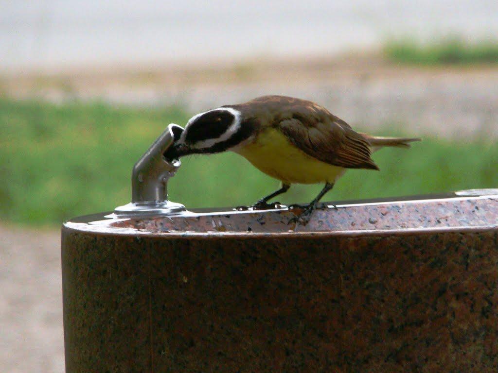 Os passarinhos também ajudam na conta
