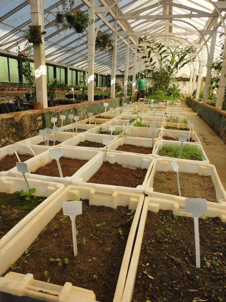 Ao fundo, em meio as plantas, Valter Passos; viveiro origina mais de 90 mil plantas