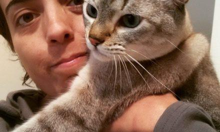 Cat sitters: a salvação dos donos de gatos que precisam viajar